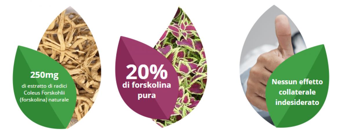 Forskolin forskolina ingredienti componenti